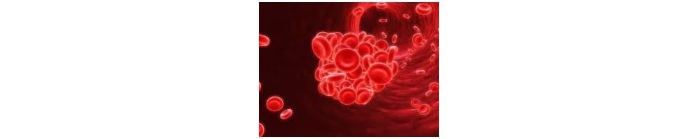 Categoría principal: Anemia